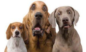 surprised dog